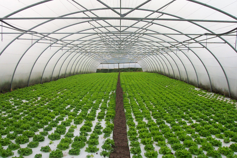 Qu es un invernadero for Que es una mesa de cultivo